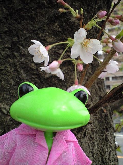 200804_spring01.JPG