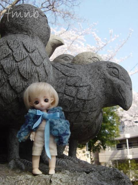 20090407_hato05.jpg