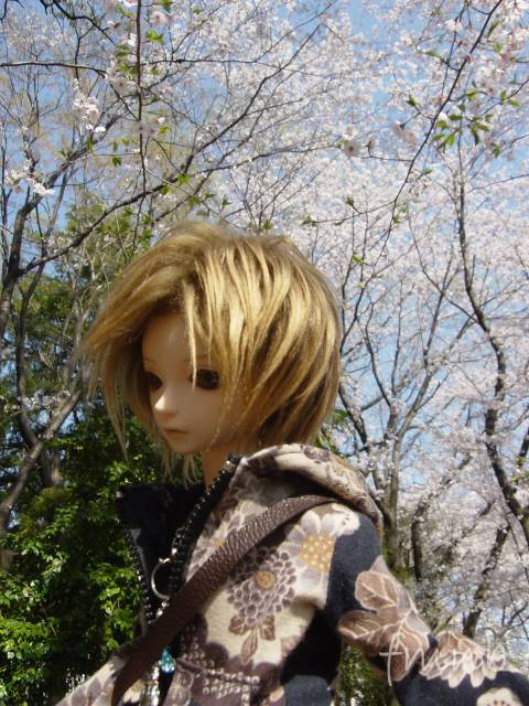 20090407_wood01.jpg